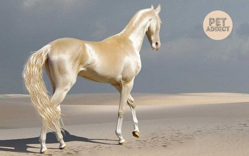 Top-10-best-horse-breeds-in-the-world
