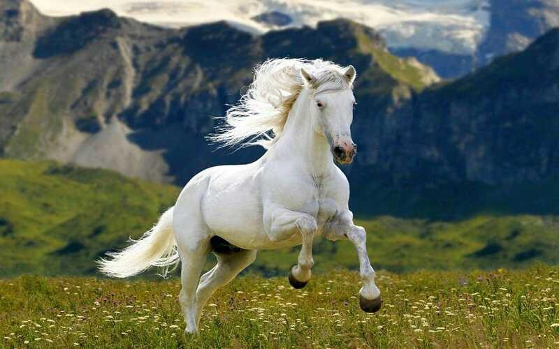 Top 10 Best Horse in the World 2021