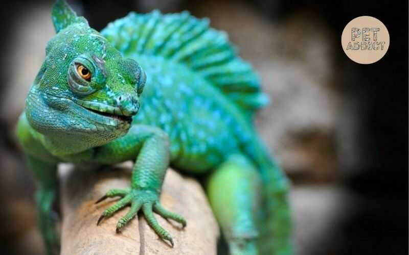 What Are Reptiles? Learn All About Reptiles