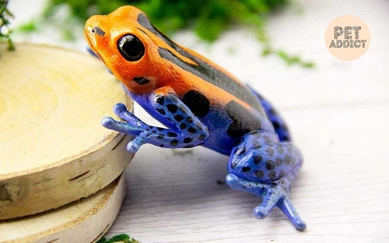 What-Are-Reptiles-Learn-About-Reptiles