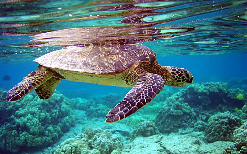 Sea Turtles and Interesting Facts About Them
