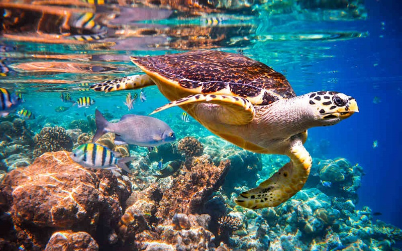 Interesting-facts-about-sea-turtles