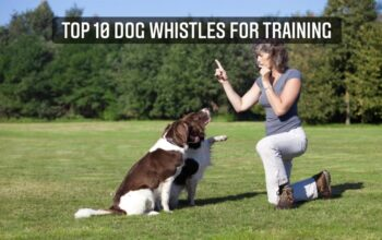 Top-10-Dog-Whistles-for-Training