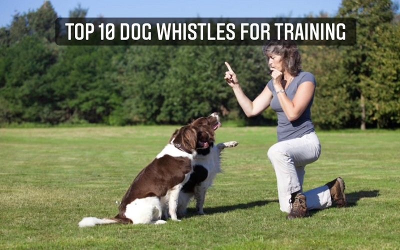 Top 10 Dog Whistles for Training Dog in 2021