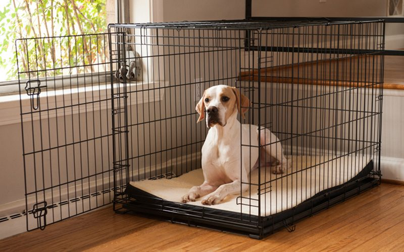 How to Choose and Classify the Best Dog Crates?