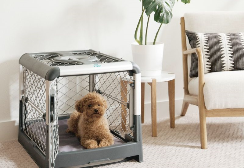 How to buy the best dog crate